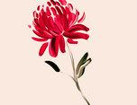 "wild-flowers ""花朵""插画设计"