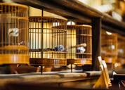 局气餐厅设计-新店升级