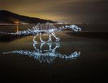 色彩缤纷的动物光绘摄影
