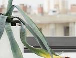 Business Plants 植物摄影艺术展览