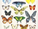 Botanical Illustrations 插画设计